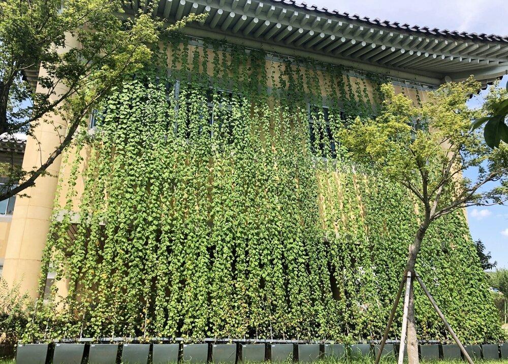 나주시 농업기술센터 건물 외벽에 조성된 녹색커튼